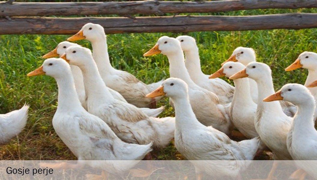 Gosje perje